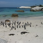 Penguins at the Boulders